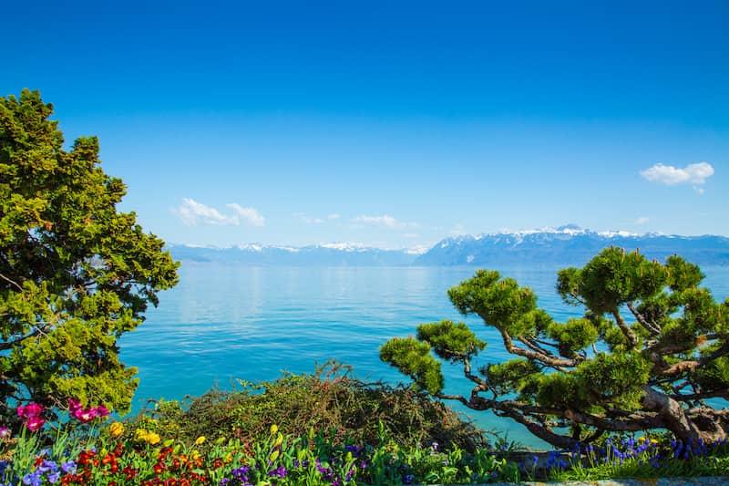 Sourcing de plantes de jardin, Plantideal basé en Suisse
